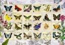 Anatolian Puzzle 500 Parça Kelebekler 3583